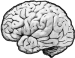 SolTec Lounge Brain Image
